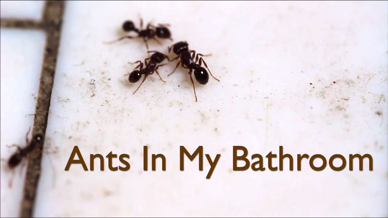 ants in my bathroom video - youtube