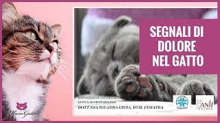 Signs of pain in the cat: how to understand when the cat is bad: seminar dott.ssa Iolanda Gioia