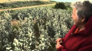 Early Fall Medicine Walks with Elder Betty McKenna