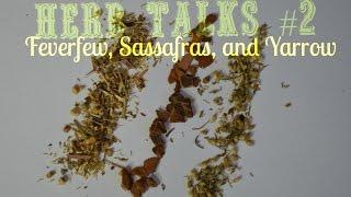 Herb Talks #2| Feverfew, Sassafras, and Yarrow.