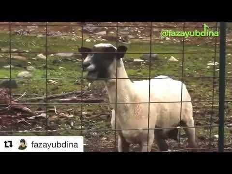Eta terangkanlah (parody) /video lucu kucing