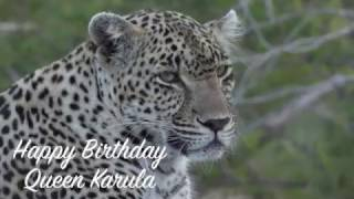 happy-birthday-to-the-queen-of-djuma-karula-safarilive