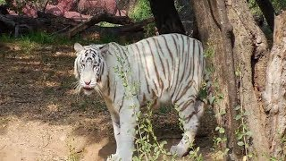 Nehru Zoo Hyderabad Hd Video Full Coverage Nehru Zoological