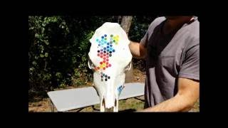 Honeycomb Cow Skull Carving Painting Youtube