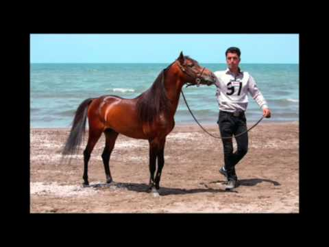 The Caspian Horse: 50th Anniversary of its Rediscovery