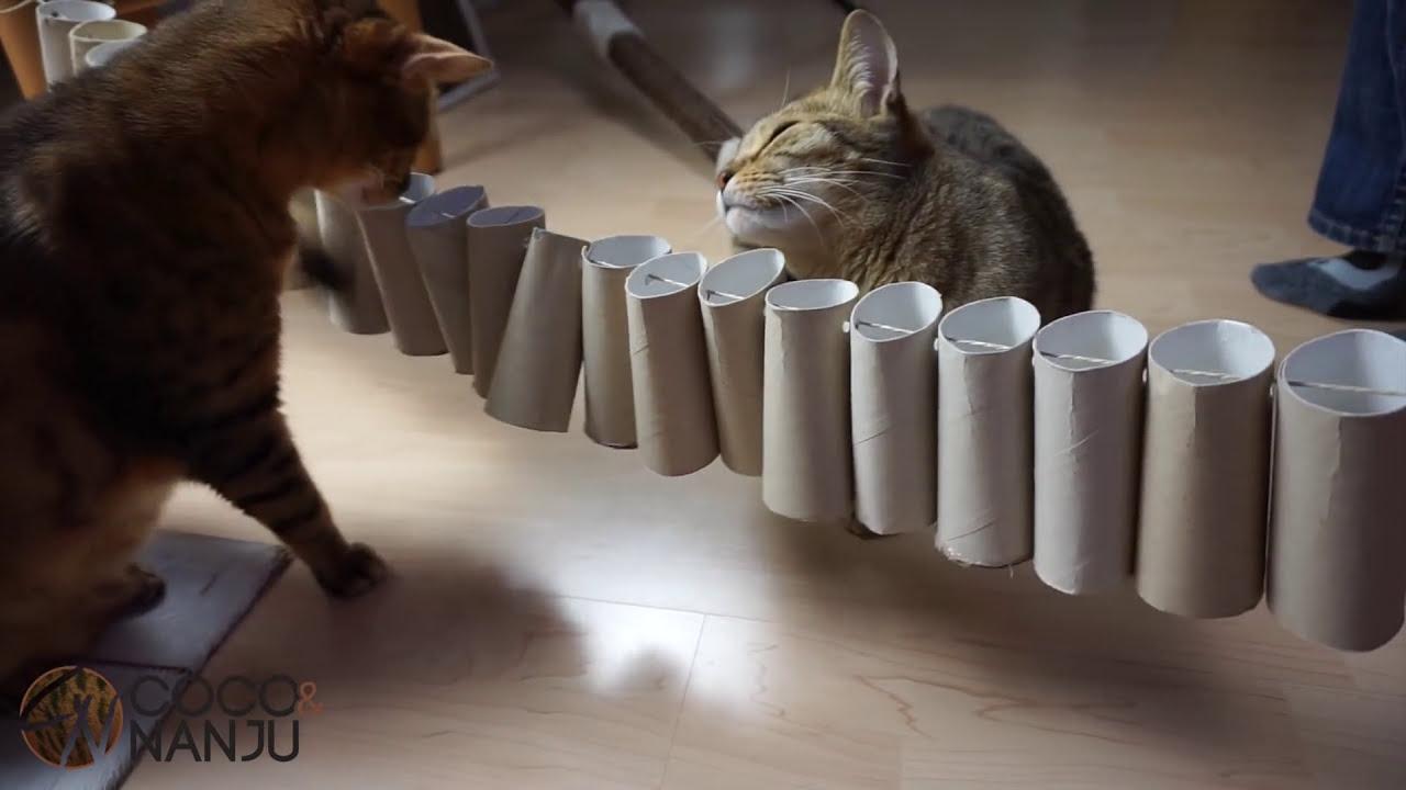 5 Hacks Katzenspielzeug Aus Klopapierrollen Basteln Coco