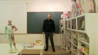 Anatomi-skolen - Introduktion til lymfekredsløbet.flv