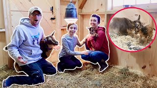 Willow FINALLY Gives BIRTH! we Can't BELIEVE how FAST it HAPPENED! (Miniature Goat Birth)