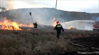 OSP Dobromierz likwiduje pożar zboża