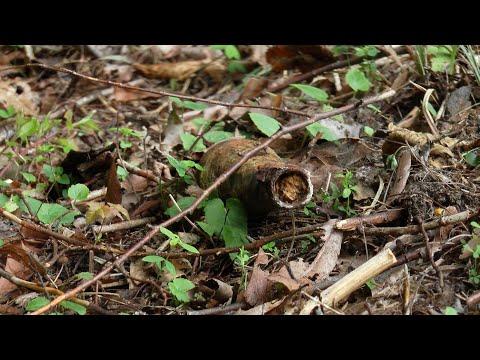 Шукали гриби, а знайшли снаряд: На Ужгорощині виявили боєприпас Другої світової