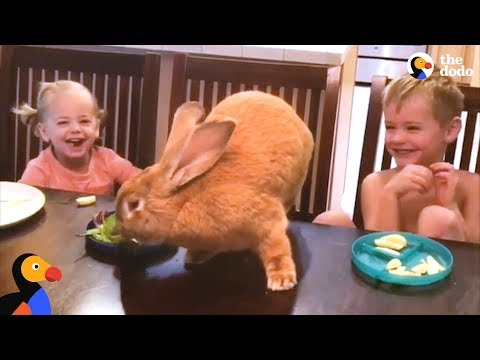 Giant Bunny Has The Best Family - COCOA PUFF   The Dodo