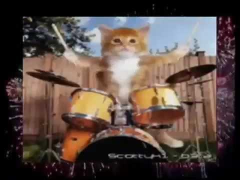 Funny Cats sing happy new year - Mèo hát chúc mừng năm mới cực đáng yêu