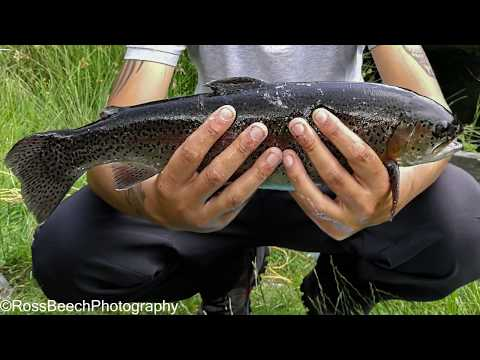Fly Fishing For Trout At Tavistock Trout Farm
