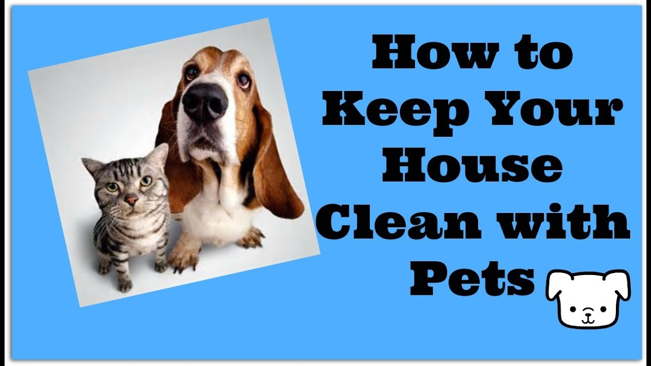 How To Keep Your House Clean With Pets Vacuum Your Dog