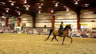 Everything Equine Event - Champlain Valley Expo, Vermont