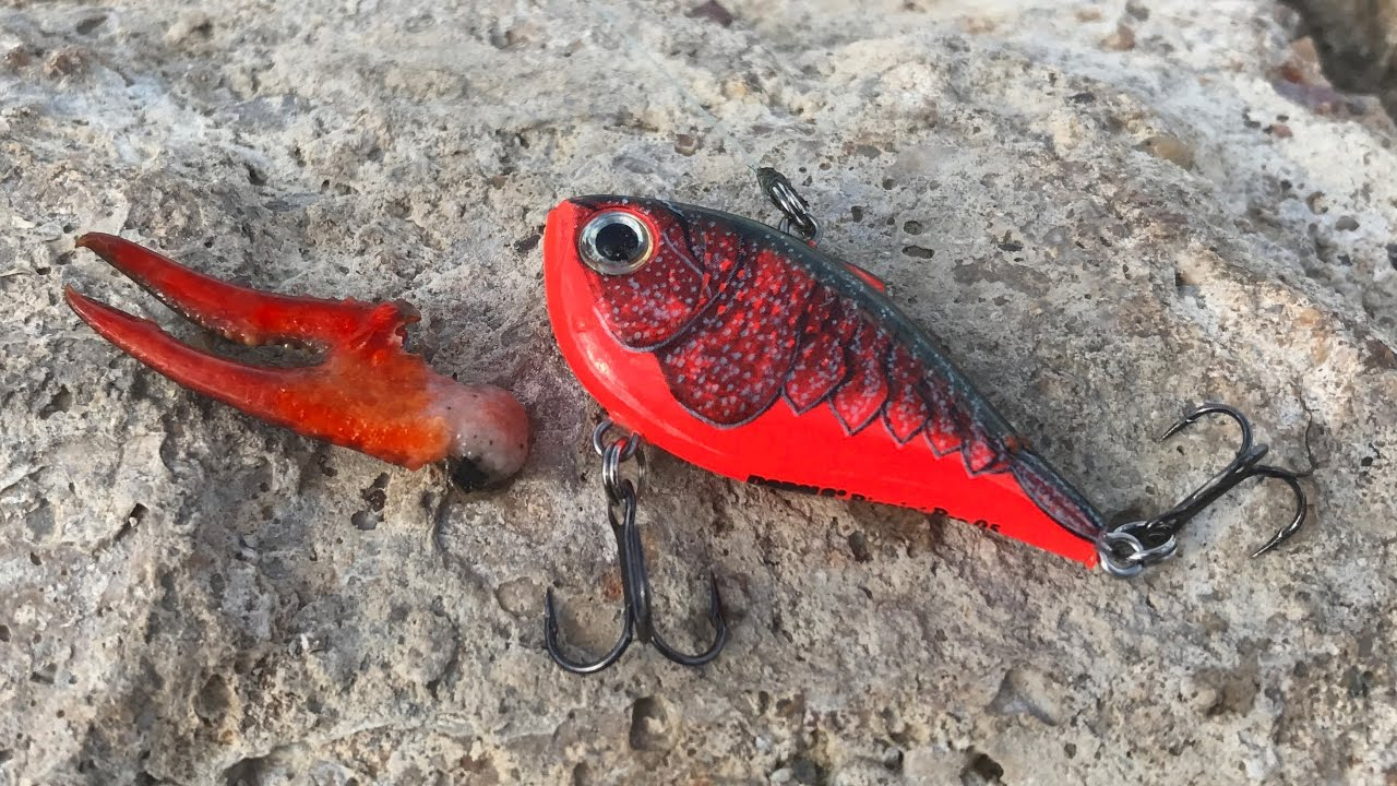 Find crawfish throw this lure winter pond bass fishing for Buy bass fish for pond