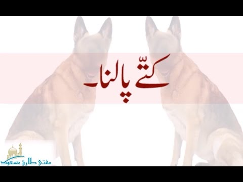 Can Muslims feed Dogs at Home -  Hindi Urdu Fatwa