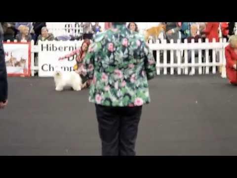 Hibernian All Breed Championship Show