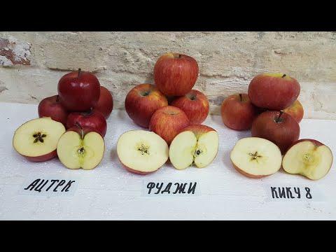 Сравнение яблок серии  Fuji Фуджи