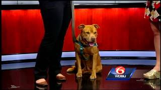 LA/SPCA offers program to help manage dog behavior