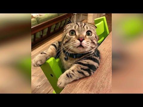 Смешные кошки 2019