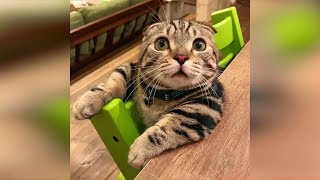 Смешные кошки 2019 КОТЫ и СОБАКИ 2019 Смешные коты приколы про котов до слез – Funny Cats #68