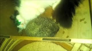 Кошка гладит ежика - Ежик гладит кошку! Но это не точно.