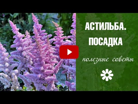 Астильба и Хоста - тенистый сад 🌸 Посадка и уход за цветами HitsadTV