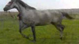 murgeni anglia bacesti spania calul lui buzatu