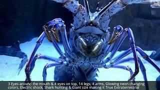 Real Extraterrestrial Neon Alien, 14 Legs, 4 Arms, 7 Eyes Eats 7 Feet Tiger Leopard Shark On Camera!