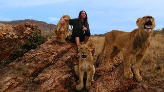 Volunteer with lions in South Africa