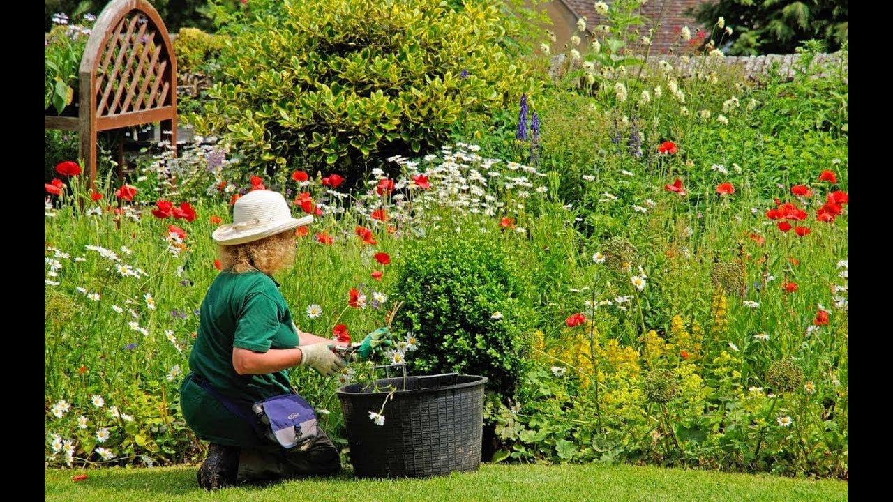 вам сад огород дача цветы мое хобби фото фонтан мелко распыляет