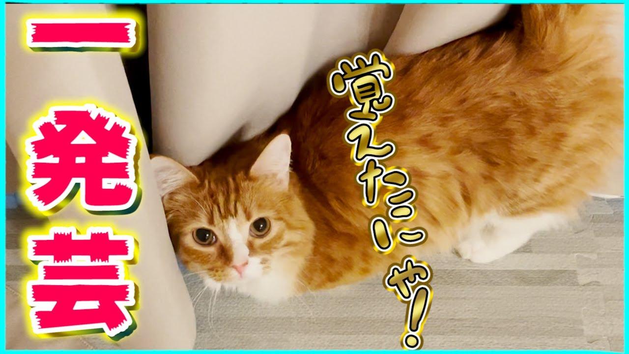 【カメラ】我が家の猫が可愛すぎる芸を習得しました【すとぷり】 #shorts