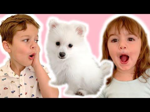 VLOG #63 // Le Plus Cute PUPPY Du Monde (La Réaction Des Enfants )