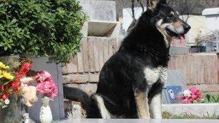 Hund wacht über Grab! Aufnahmen die zu Tränen rühren!