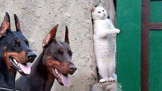 Если бы Эти Случаи с Животными не Сняли на Камеру, Никто бы не Поверил