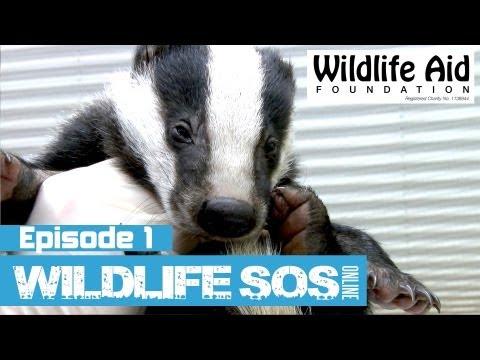 Wildlife SOS Online  Episode 1