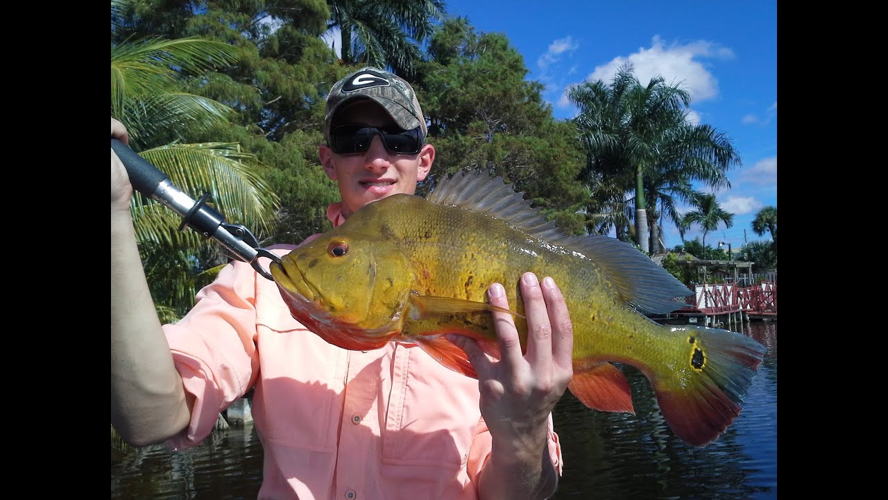 Top water peacock bass and snook fishing in south florida for South florida fishing