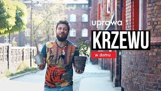 Czy można uprawiać krzew herbaty w domu? Czajnikowy.pl