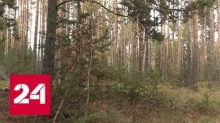 Активисты ОНФ выявили масштабные нелегальные вырубки в Омской области - Россия 24