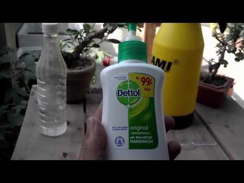how to make homemade bug spray for plants