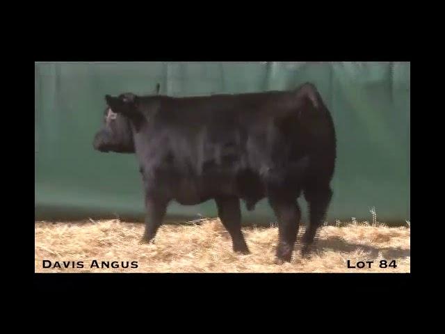 Davis Angus Lot 84