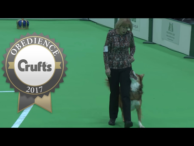 Obedience Championship - Dogs - Part 6 | Crufts 2017