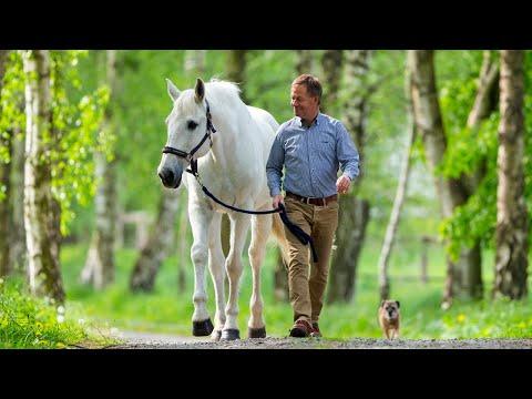 Bild: Namhafte Pferdesenioren - Alte Helden