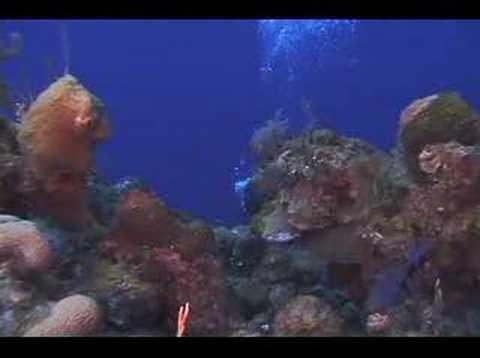 Episode 16 - Black Coral Forest