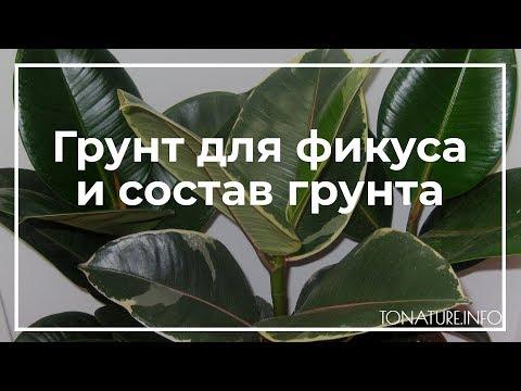 Грунт для фикуса и состав грунта | toNature.Info