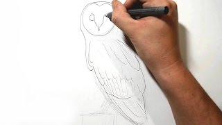 How to Draw a Barn Owl - Real Time Drawing