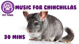 Baixar Music for Your Chinchillas! Chinchilla Music, Relaxing Music for Chinchillas