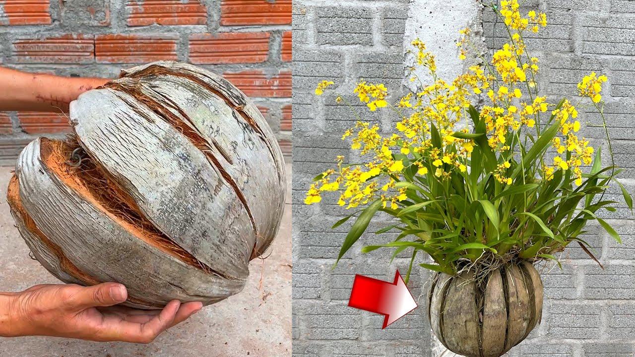 Cách làm chậu hoa trồng lan bằng quả dừa khô | Take care of orchids
