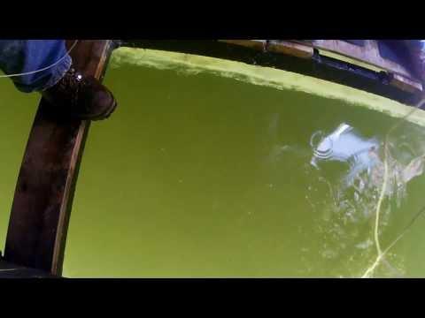 134 lb Sturgeon Speared on Lake Winnebago - 2014